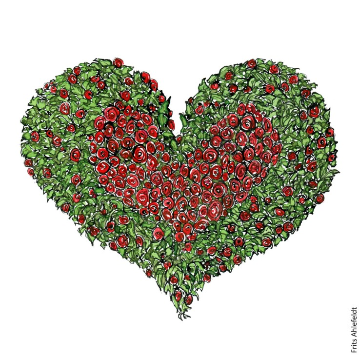 Drawing of a heart shaped form of red roses and green. Thrive illustration by Frits Ahlefeldt