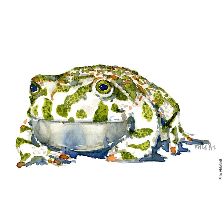 Illustration of green toad - front. Frog watercolor painting handmade by Frits Ahlefeldt