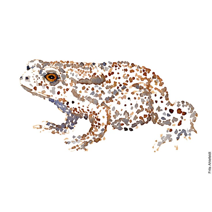 Frog watercolor handmade by Frits Ahlefeldt