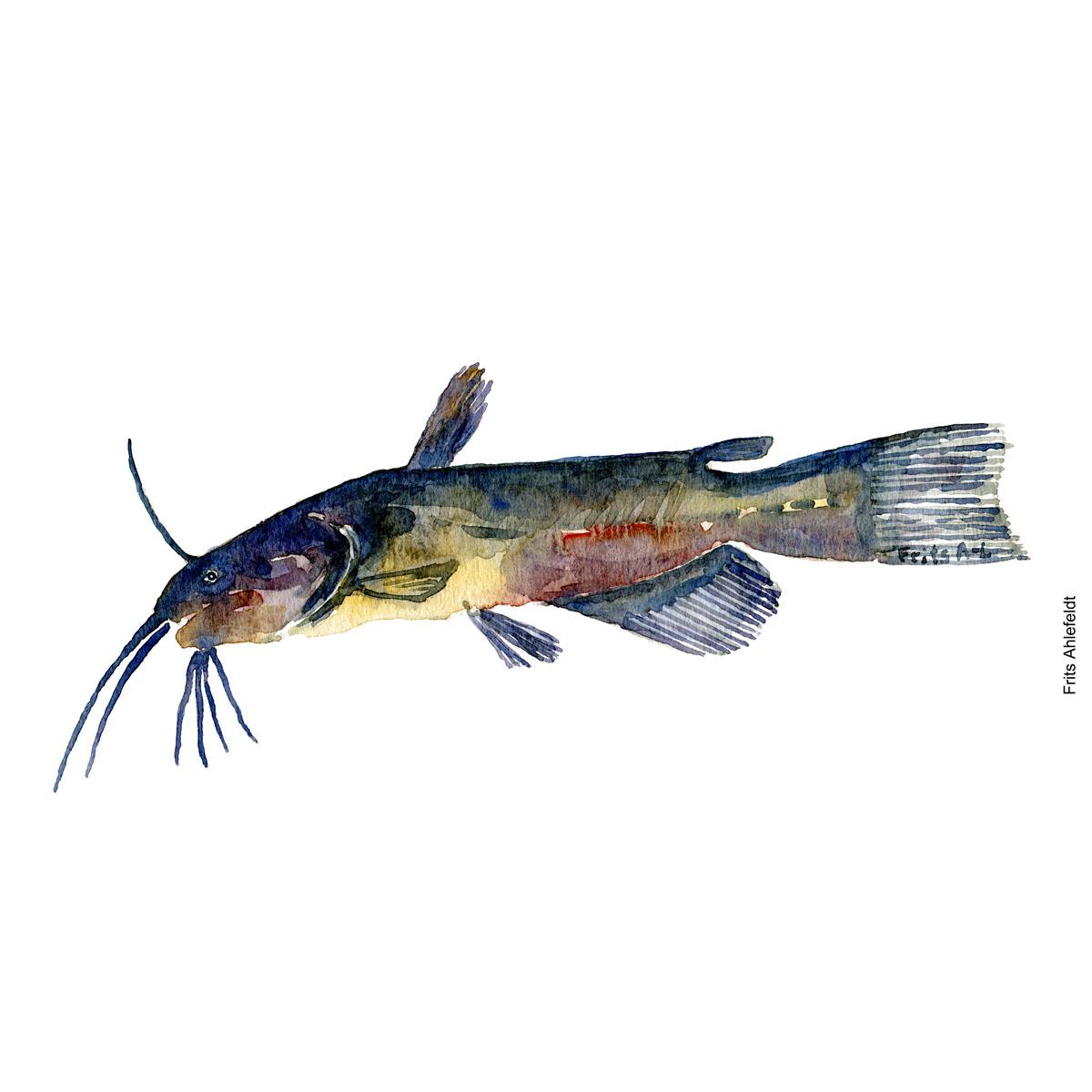 Illustration of Brown bullhead. Brun dværgmalle. Freshwater fish watercolour handmade by Frits Ahlefeldt