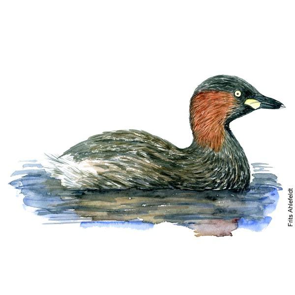 Little grebe Bird watercolor illustration handmade by Frits Ahlefeldt