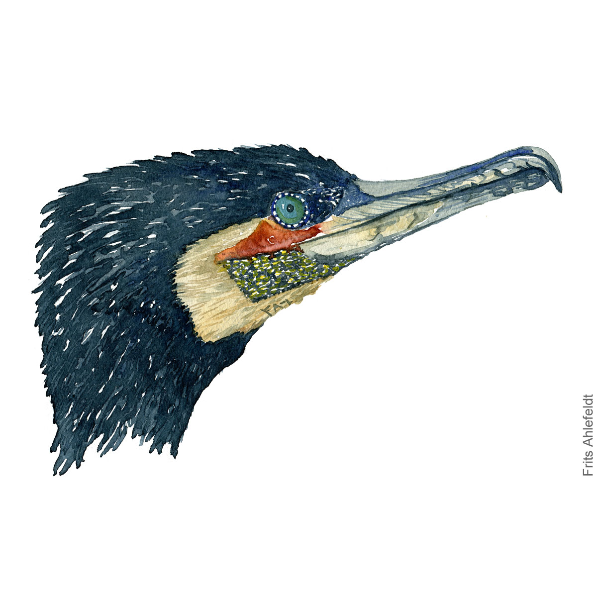 Great cormorant head. Bird watercolor illustration handmade by Frits Ahlefeldt