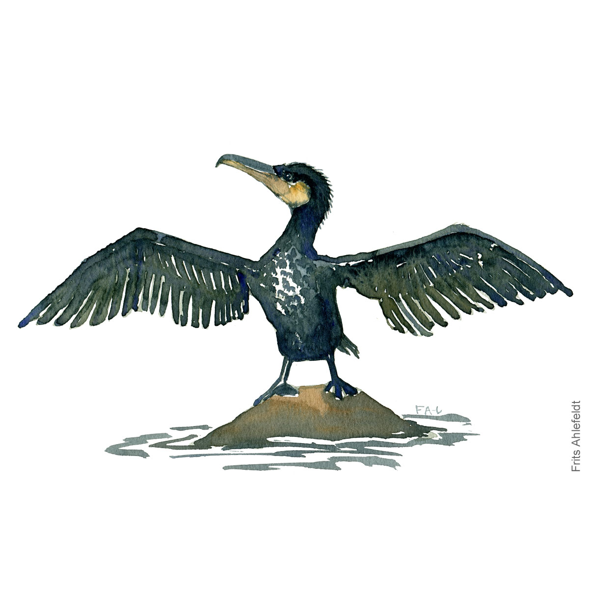 Great cormorant with wings out Bird watercolor illustration handmade by Frits Ahlefeldt