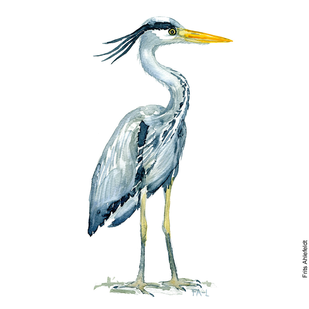 Grey heron Bird watercolor illustration handmade by Frits Ahlefeldt
