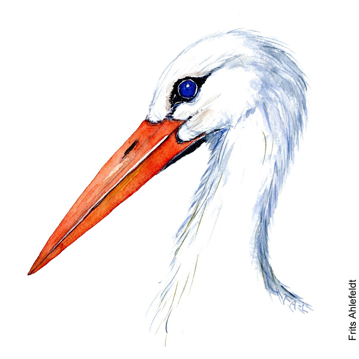 White stork head Bird watercolor illustration handmade by Frits Ahlefeldt