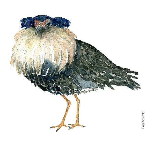 Ruff Bird watercolour illustration handmade by Frits Ahlefeldt