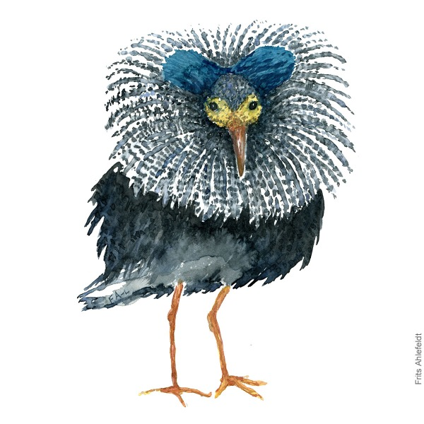 Blue headed ruff. Bird watercolour illustration handmade by Frits Ahlefeldt
