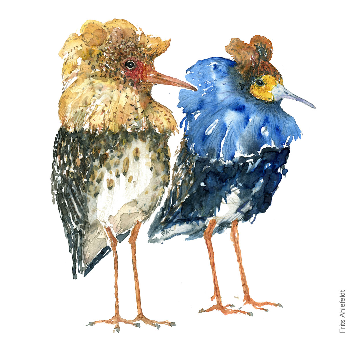 Yellow and blue ruff. Bird watercolour illustration handmade by Frits Ahlefeldt