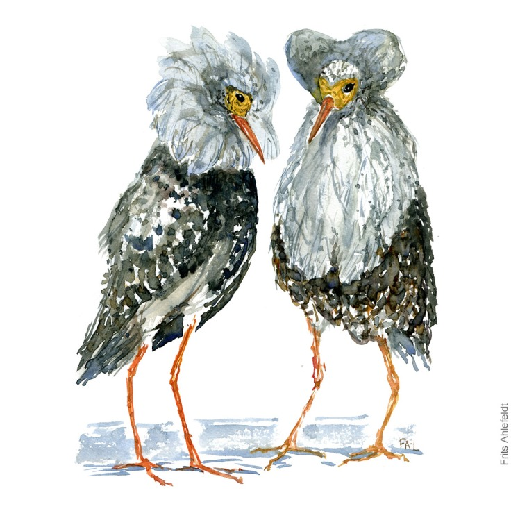 Two grey ruffs Bird watercolour illustration handmade by Frits Ahlefeldt