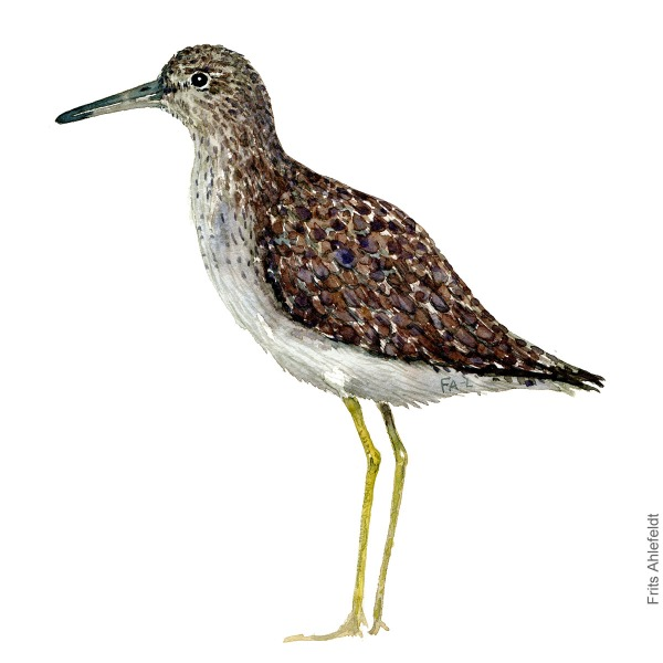 Wood sandpiper. Bird watercolour illustration handmade by Frits Ahlefeldt
