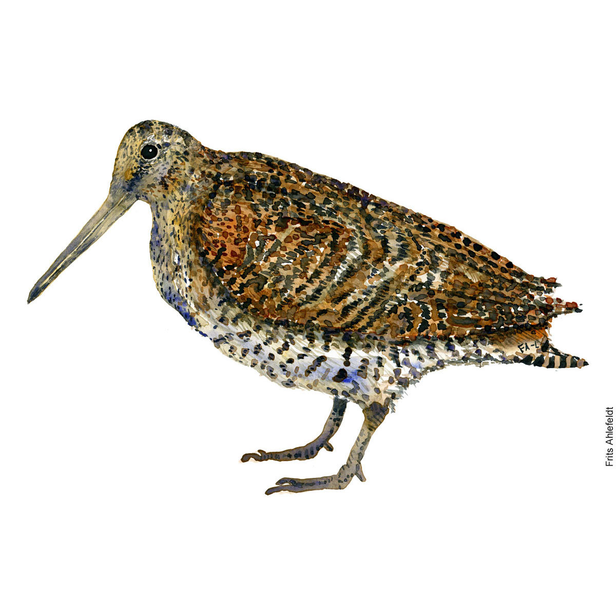 Woodcock Bird watercolour illustration handmade by Frits Ahlefeldt