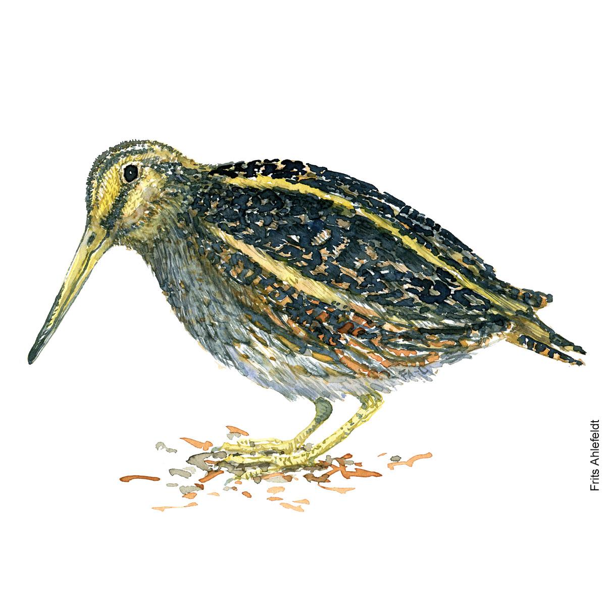 Jack snipe. Bird watercolour illustration handmade by Frits Ahlefeldt