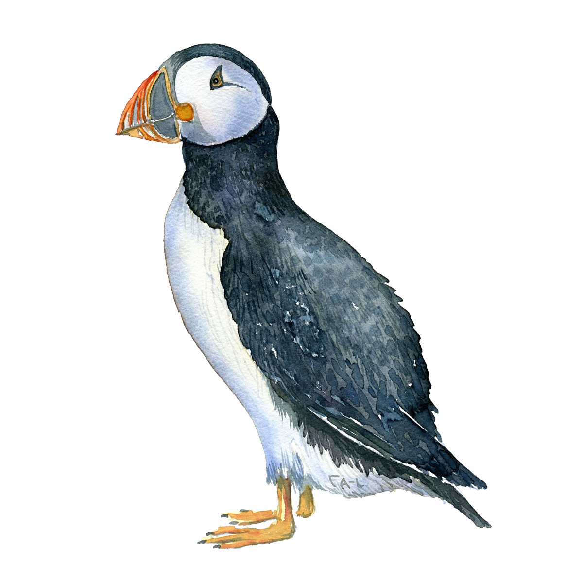 Lunde - Atlantic puffin bird watercolor painting. Artwork by Frits Ahlefeldt. Fugle akvarel