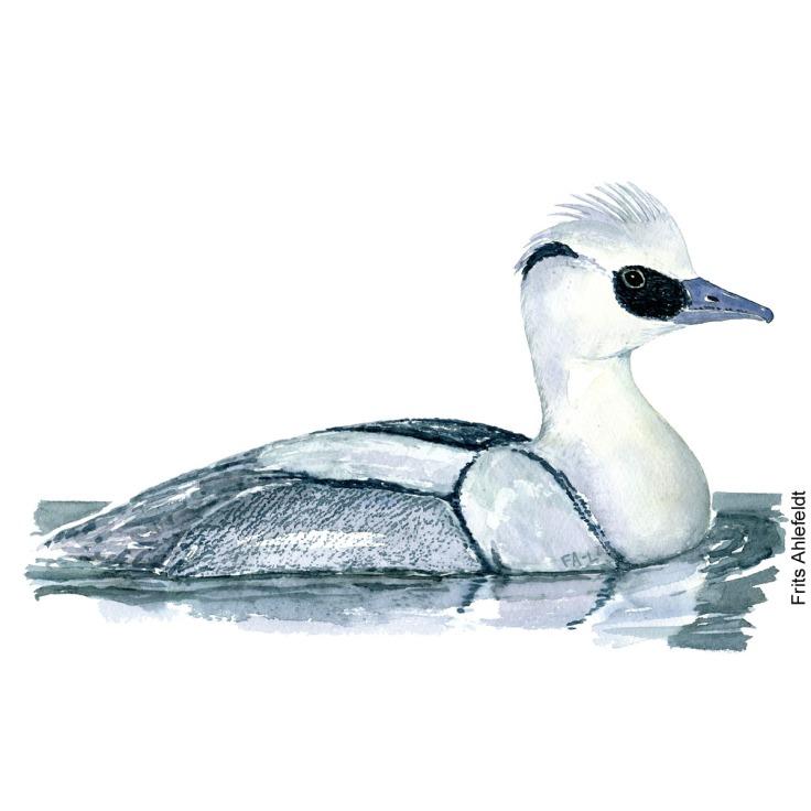Lille skallesluger - Smew bird watercolor painting. Artwork by Frits Ahlefeldt. Fugle akvarel