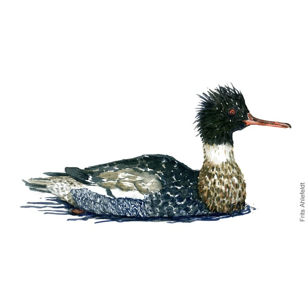 Toppet skallesluger - Red breasted merganser bird watercolor painting. Artwork by Frits Ahlefeldt. Fugle akvarel
