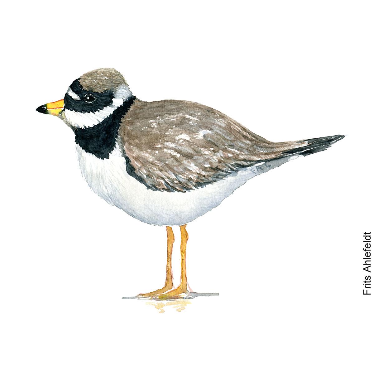 Stor praestekrage - Common ringed plover bird watercolor painting. Artwork by Frits Ahlefeldt. Fugle akvarel