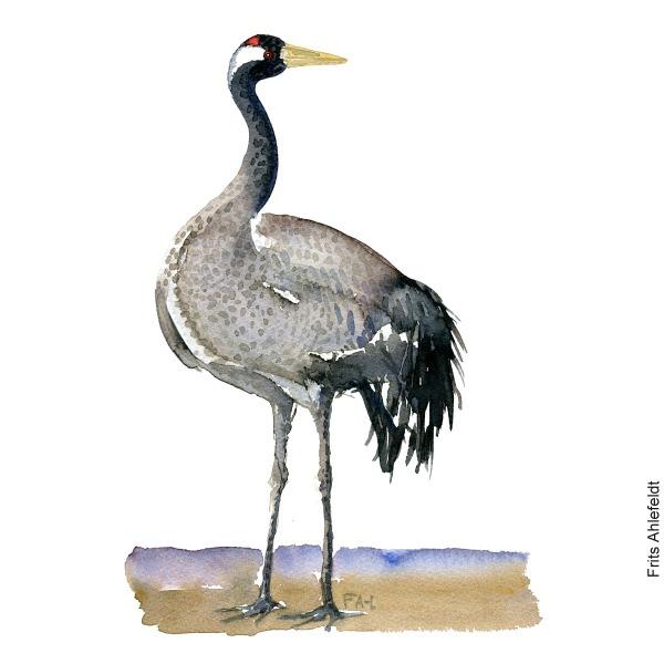 Trane - Crane bird watercolor painting. Artwork by Frits Ahlefeldt. Fugle akvarel