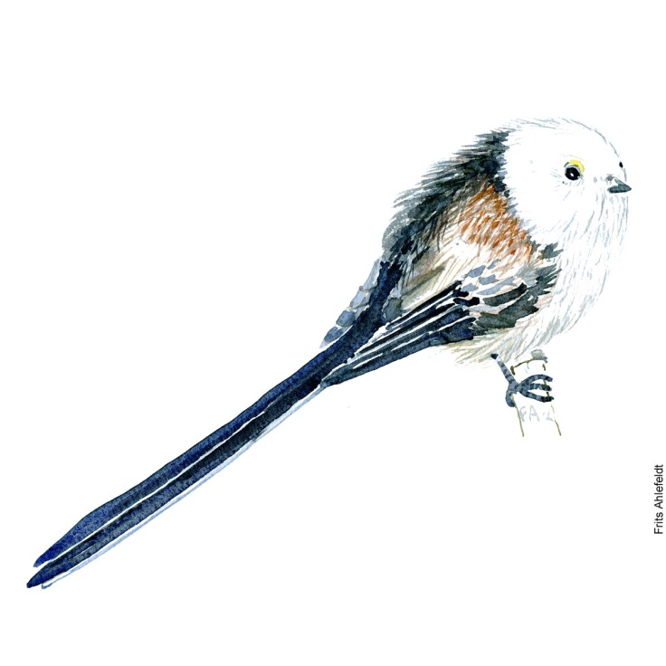 Long tailed tit bird watercolor painting. Artwork by Frits Ahlefeldt. Fugle akvarel
