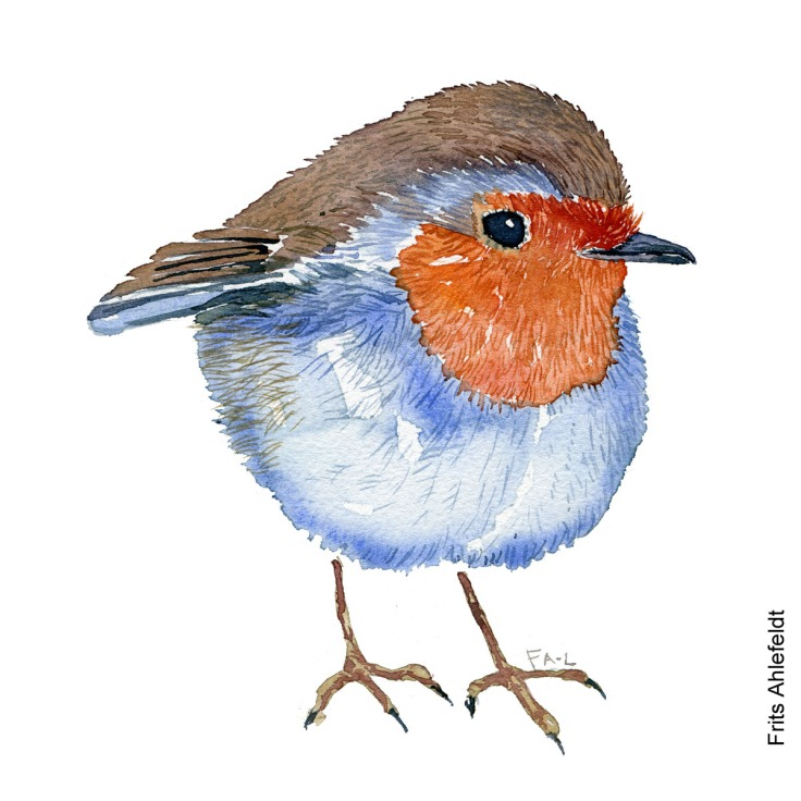 Roedhals - Robin bird watercolor painting. Artwork by Frits Ahlefeldt. Fugle akvarel