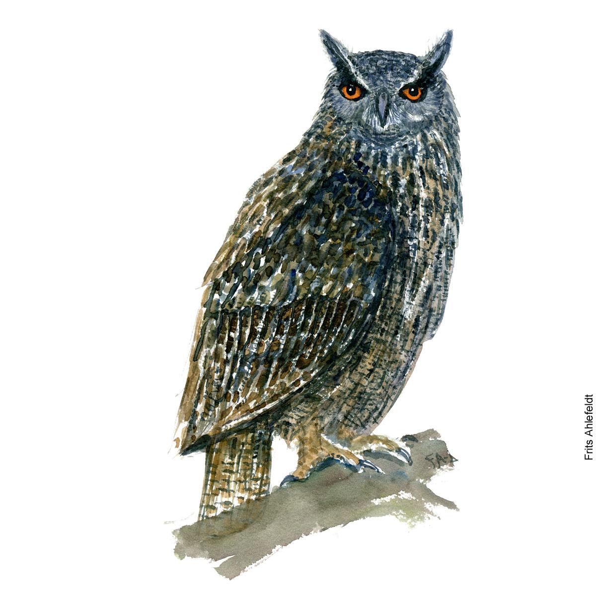 European eagle owl bird watercolor painting. Artwork by Frits Ahlefeldt. Fugle akvarel