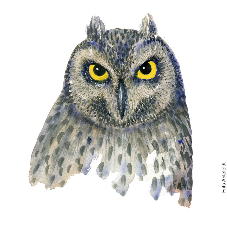 Hornugle - Owl bird watercolor painting. Artwork by Frits Ahlefeldt. Fugle akvarel