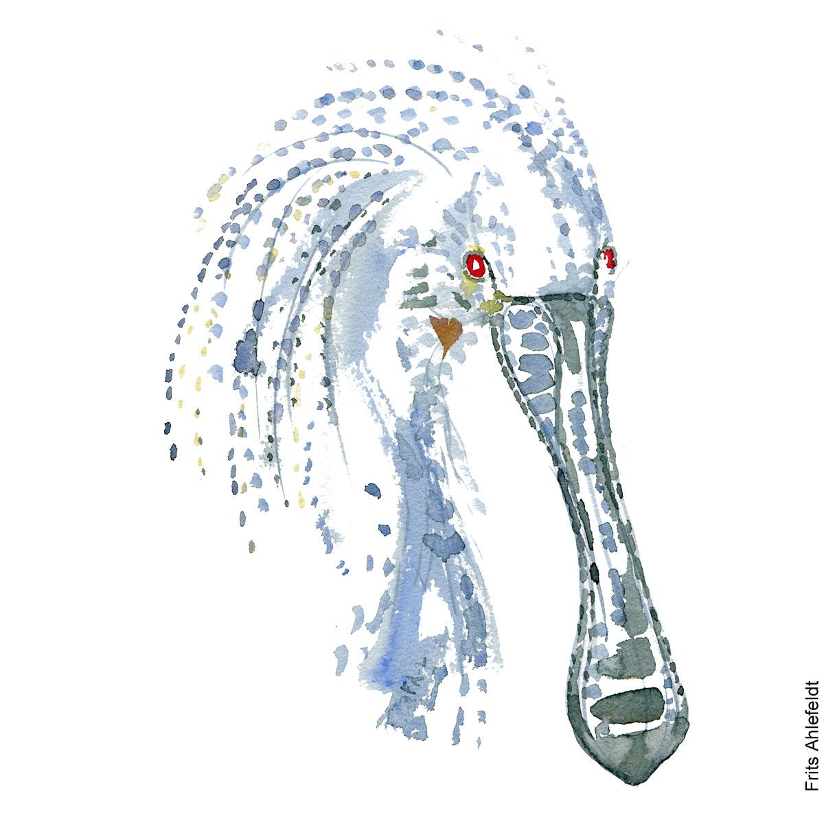 Skestork - Spoonbill bird watercolor painting. Artwork by Frits Ahlefeldt. Fugle akvarel