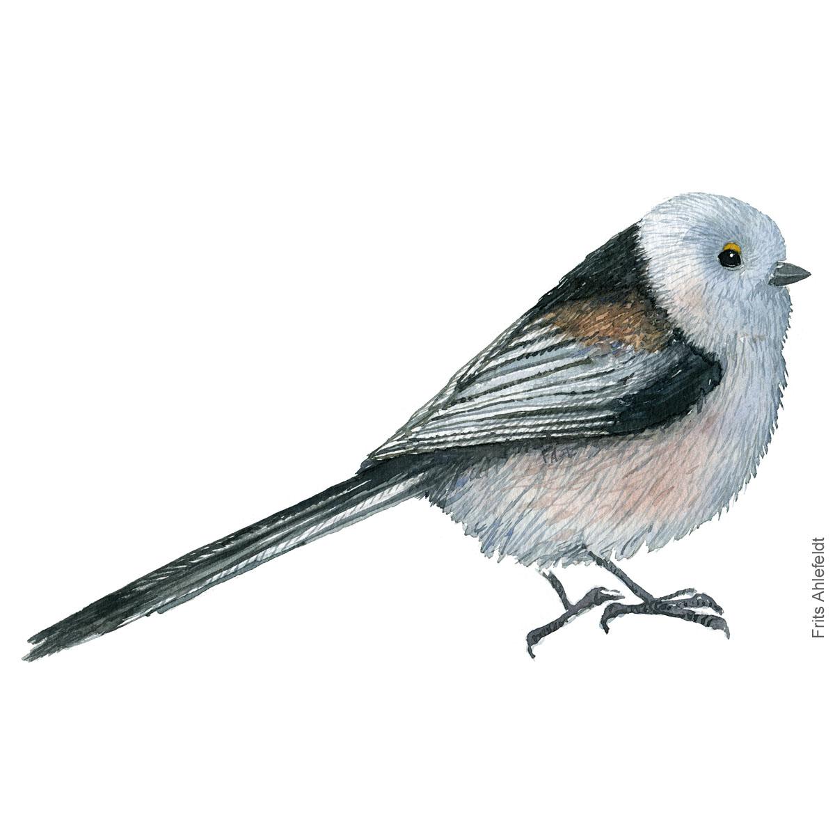 Halemejse - Long tailed tit - Bird watercolor painting. Artwork by Frits Ahlefeldt. Fugle akvarel