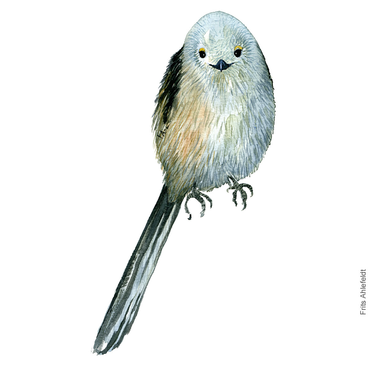 Halemejse - Long tailed tit - Bird watercolor painting. Artwork by Frits Ahlefeldt. Fugle akvarel