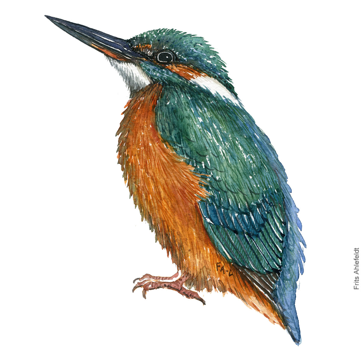 Isfugl - Kingfisher - Bird watercolor painting. Artwork by Frits Ahlefeldt. Fugle akvarel