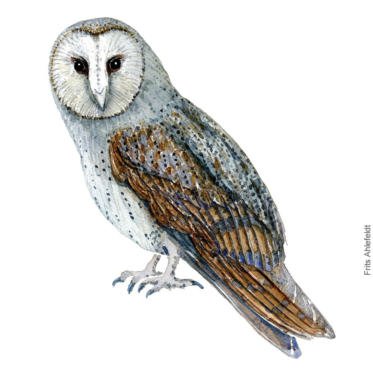 Slorugle - Barnowl - Bird watercolor painting. Artwork by Frits Ahlefeldt. Fugle akvarel