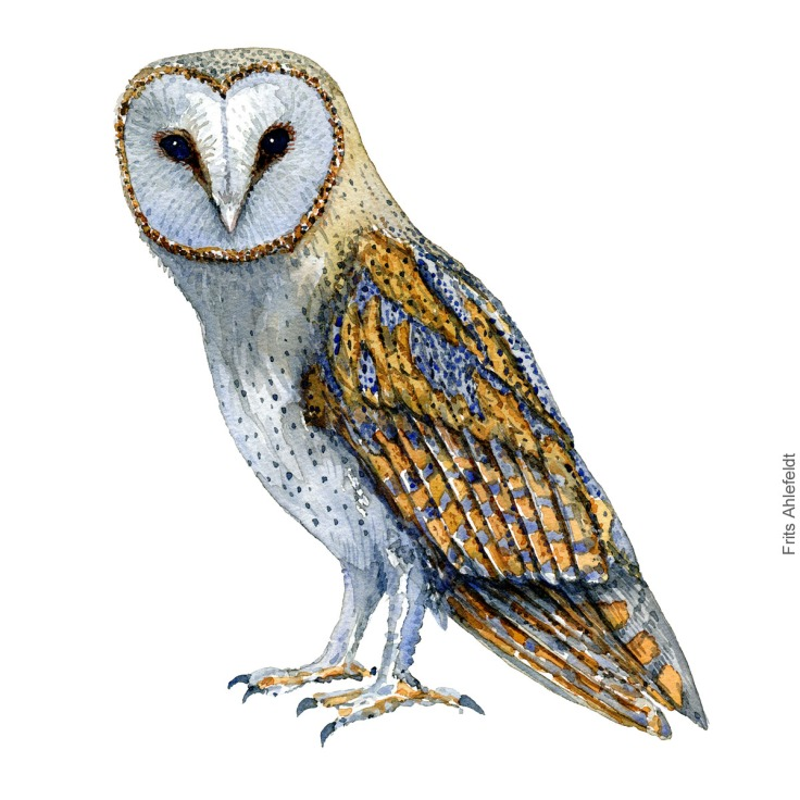 Sloerugle - Barnowl - Bird watercolor painting. Artwork by Frits Ahlefeldt. Fugle akvarel