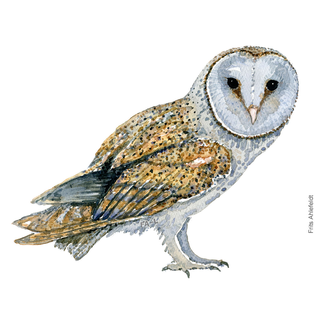 Sloerugle - Barnowl - Bird watercolor painting. Artwork by Frits Ahlefeldt. Fugle akvarel