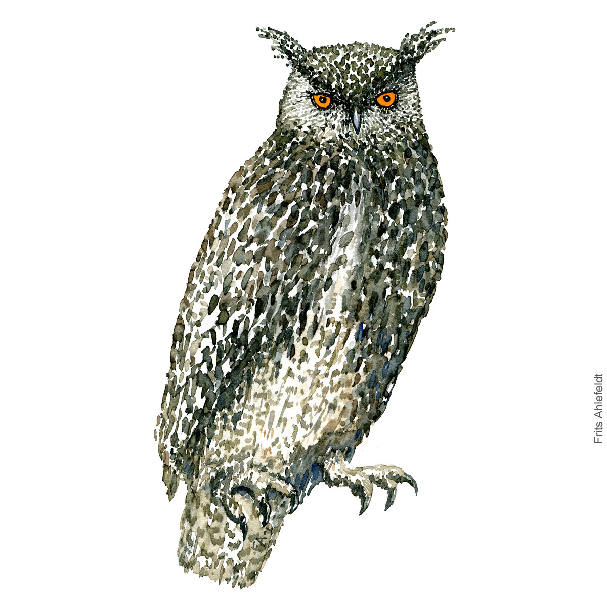 Stor hornugle - Eurasian eagle owl. - Bird watercolor painting. Artwork by Frits Ahlefeldt. Fugle akvarel