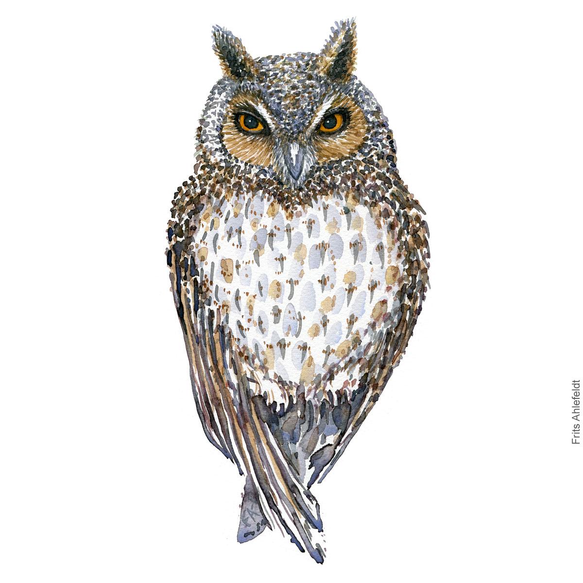 Skovhornsugle - Long eared owl - Bird watercolor painting. Artwork by Frits Ahlefeldt. Fugle akvarel