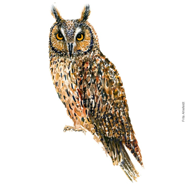 Skovhornsugle - Long-eared owl - Bird watercolor painting. Artwork by Frits Ahlefeldt. Fugle akvarel