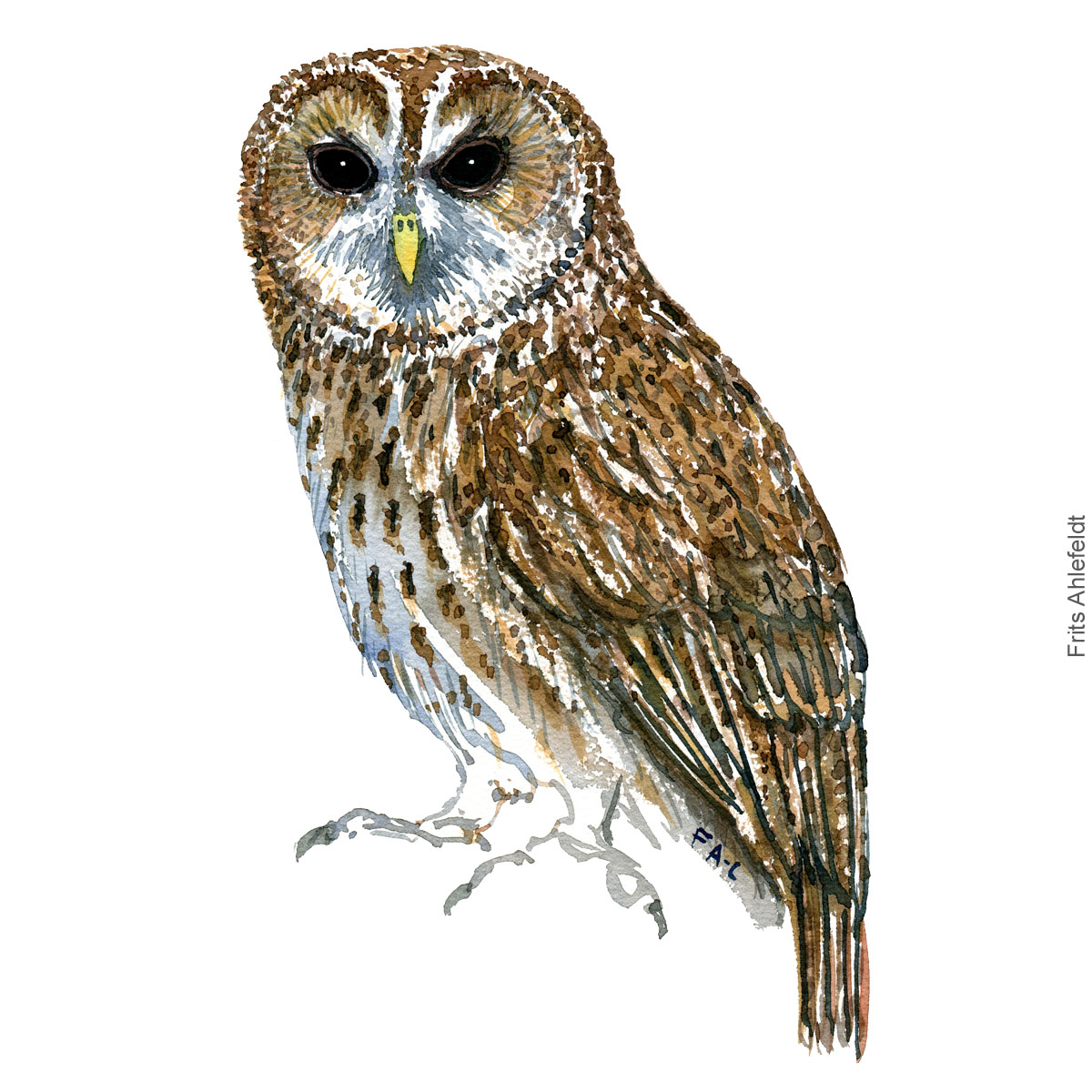 Natugle - Tawny owl - Bird watercolor painting. Artwork by Frits Ahlefeldt. Fugle akvarel