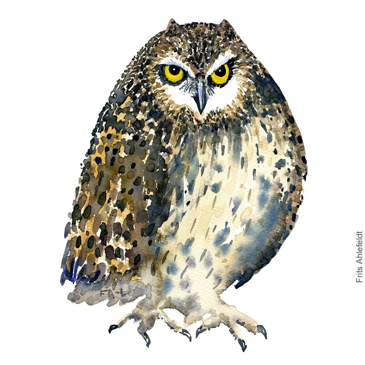 Ugle - Owl - Bird watercolor painting. Artwork by Frits Ahlefeldt. Fugle akvarel