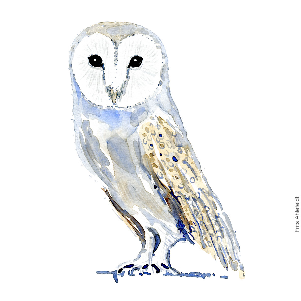 Sloerugle - Barn owl - Bird painting in watercolor by Frits Ahlefeldt - Fugle akvarel