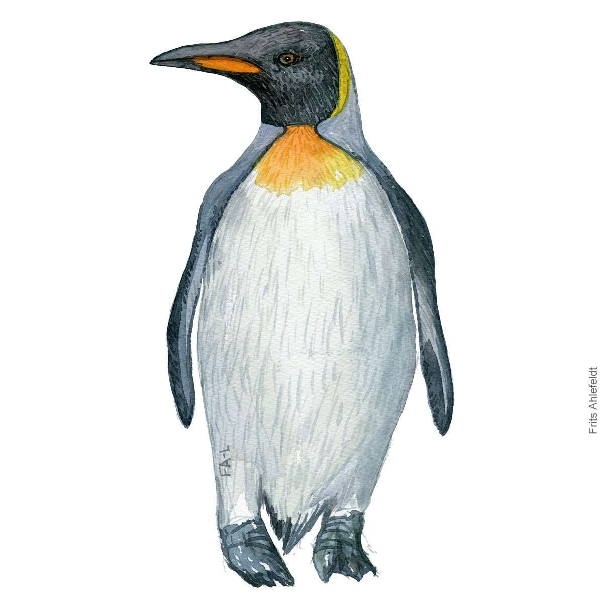 King penguin - Bird painting in watercolor by Frits Ahlefeldt - Fugle akvarel