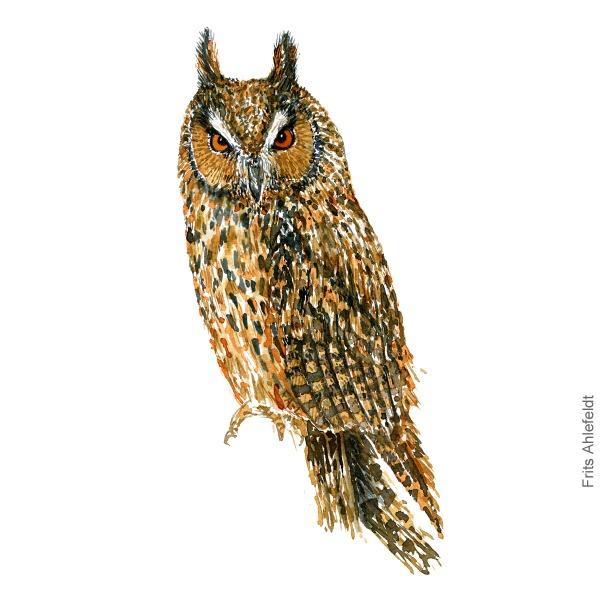 Skovhornsugle - Long-eared owl - Bird painting in watercolor by Frits Ahlefeldt - Fugle akvarel
